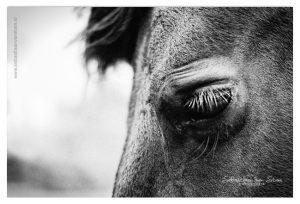 Dierenfotografie