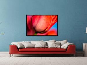 tulp rood gedrukt op dibond